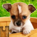 Dogs Jigsaw Puzzles Game – For Kids Adults MOD Unlimited Money 25.0