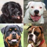 Dogs Quiz – Guess Popular Dog Breeds in the Photos MOD Unlimited Money 3.1.0